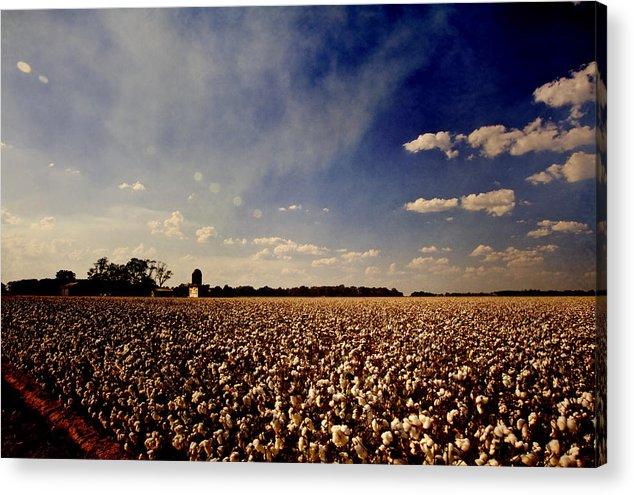 Cotton Acrylic Print featuring the photograph Cotton Field by Scott Pellegrin