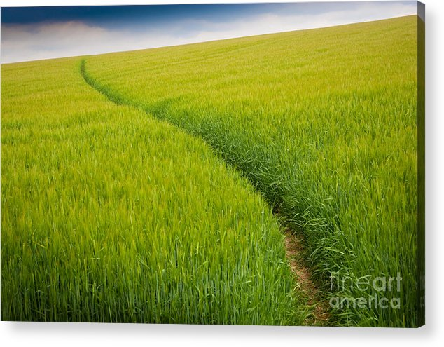 Photograph Acrylic Print featuring the photograph Green Field by Michael Hudson