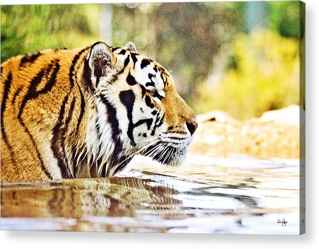 Mike Acrylic Print featuring the photograph You're Mine by Scott Pellegrin