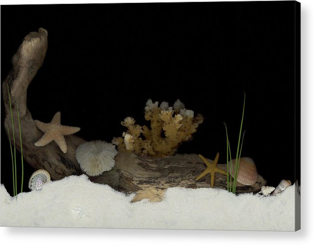 Shells Acrylic Print featuring the mixed media Down Under by Sandi F Hutchins