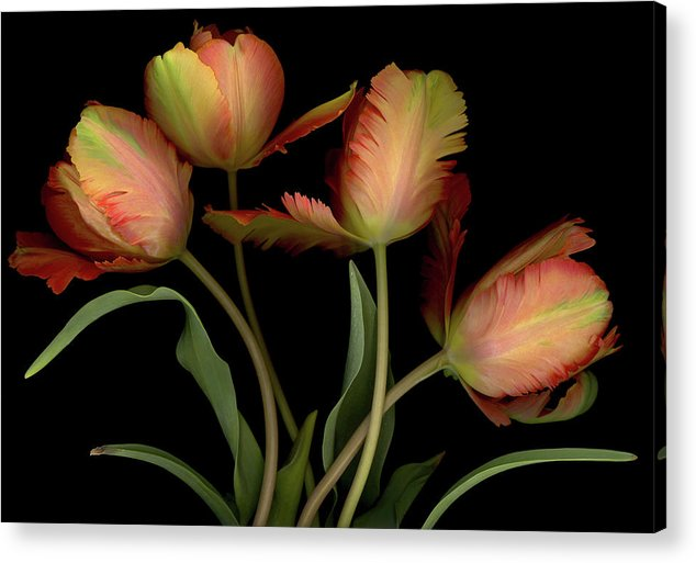 Tulips Acrylic Print featuring the digital art Splash of Spring by Sandi F Hutchins