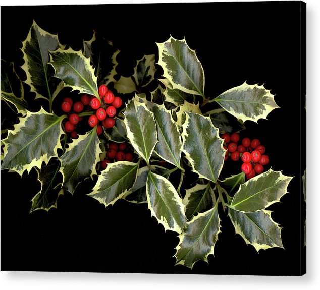 Acrylic Print featuring the photograph Holly by Sandi F Hutchins