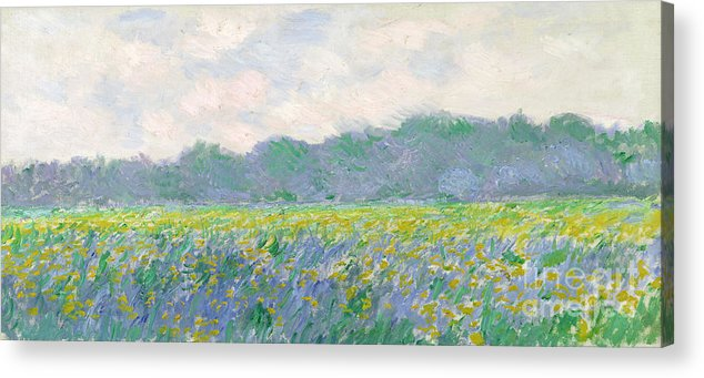 Field Acrylic Print featuring the painting Field of Yellow Irises at Giverny by Claude Monet