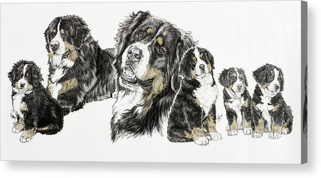 Bernese Mountain Dogs Acrylic Print featuring the painting Bernese Mountain Dog by Barbara Keith