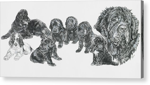 Puppies To Full Grown Newfoundland Acrylic Print featuring the painting Growing Up Newfoundland by Barbara Keith