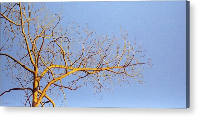 Aspen Painting Acrylic Print featuring the painting Aspen In The Autumn Sun by Elaine Booth-Kallweit
