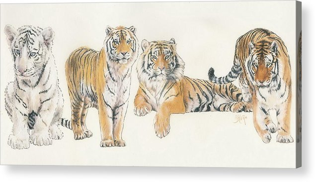 Tiger Acrylic Print featuring the mixed media Tiger Wrap by Barbara Keith