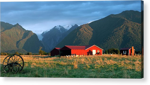 Horse Acrylic Print featuring the photograph Fox Glacier Looms Over Plain by Dmathies