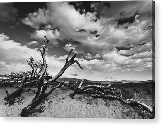 Landscape Acrylic Print featuring the photograph Dead Trees at Mesquite Dunes by Nathan Spotts