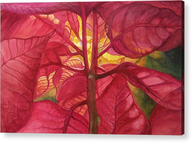 Floral;watercolor Floral;poinsettia;conceptual;poinsettias;christmas;holiday;flower;flowers;plant; Acrylic Print featuring the painting Into The Light by Lois Mountz