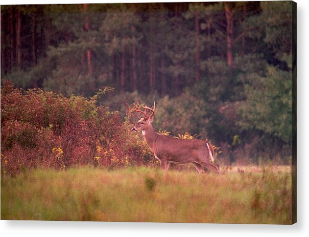 Deer Acrylic Print featuring the photograph 070406-64a by Mike Davis