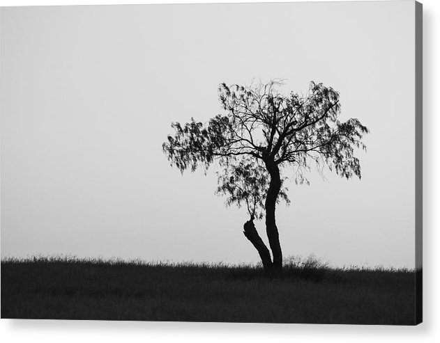 One Tree Acrylic Print featuring the photograph Untitled by Gregory Alan