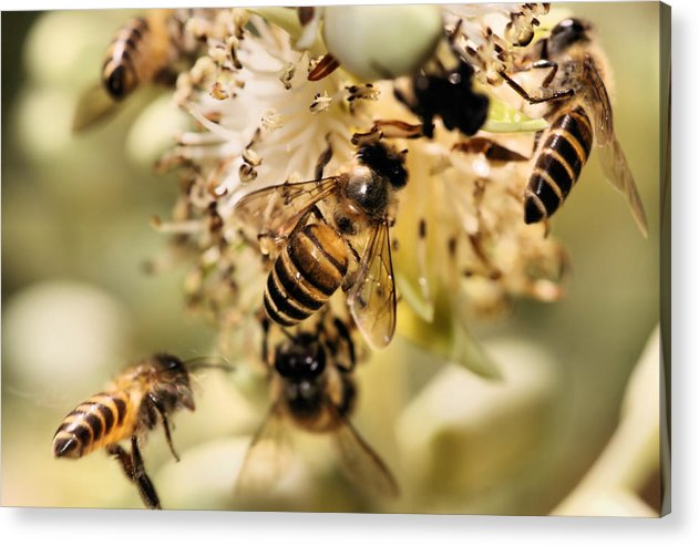 Nature Acrylic Print featuring the photograph Nectar Seekers3 by KH Lee