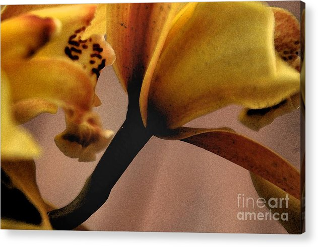 Orchid Acrylic Print featuring the photograph Orchid Yellow by Michael Ziegler