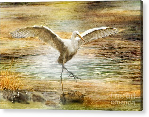 Snowy Egret Acrylic Print featuring the photograph Snowy Egret Dancing by Irina Hays