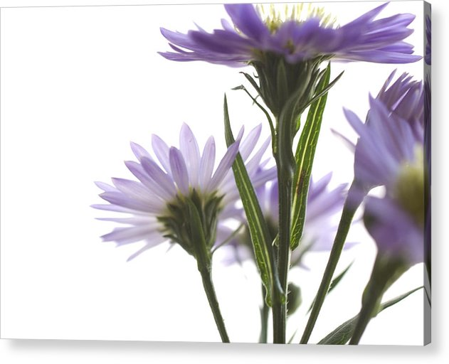 Flowers Acrylic Print featuring the photograph Flower Abstract by Jessica Wakefield