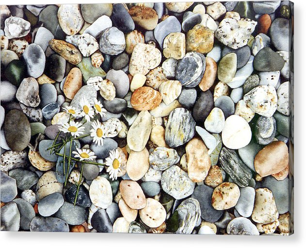 Sea Scape Acrylic Print featuring the painting Acadian Daisies by Terry OMaley