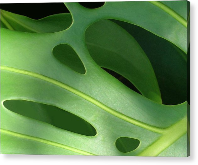 Monstera Deliciosa Acrylic Print featuring the photograph Monstera by James Temple