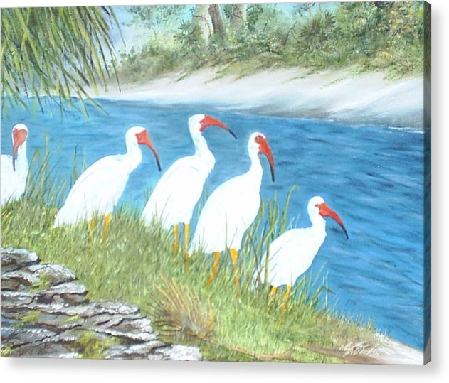 Birds Acrylic Print featuring the painting Ibis by Dennis Vebert