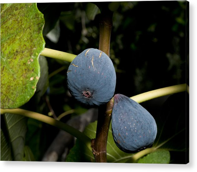 Figs Acrylic Print featuring the photograph Figs by Jim DeLillo