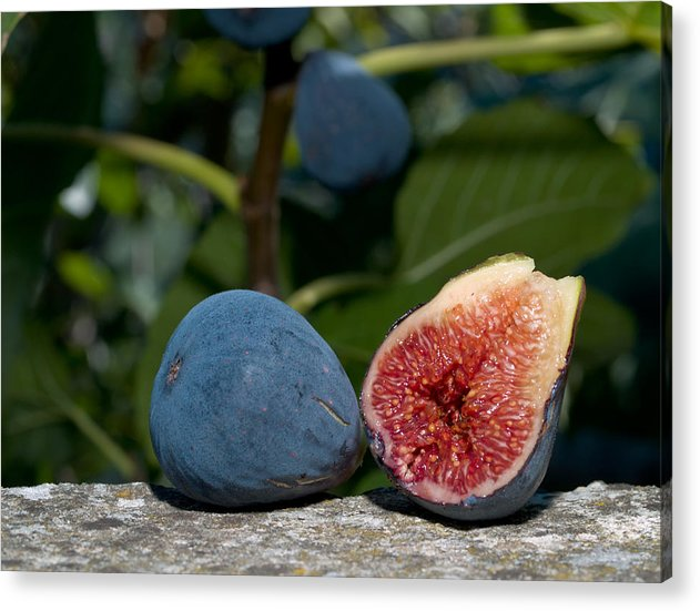 Fruit Acrylic Print featuring the photograph Ripe Figs by Jim DeLillo