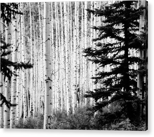 Landscape Acrylic Print featuring the photograph Aspen Afternoon by Allan McConnell
