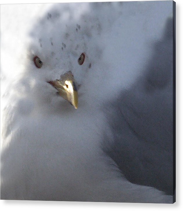 Sea Gull Acrylic Print featuring the digital art Gull by Tom Romeo