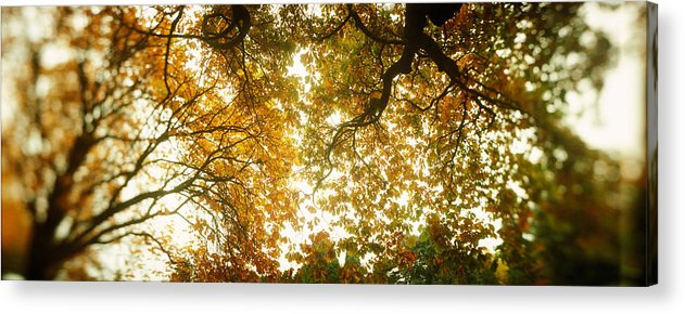 Photography Acrylic Print featuring the photograph Low Angle View Of Autumn Trees by Panoramic Images