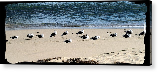 Bird Acrylic Print featuring the photograph All My Gulls In A Row by Ellen Lerner ODonnell