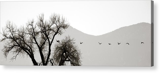 Horizon Acrylic Print featuring the photograph Free Flying by Marilyn Hunt