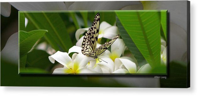 Butterfly Acrylic Print featuring the photograph A Sip Of Nectar by Allen Lang
