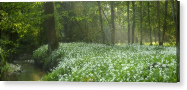 Wild Garlic Flowers Acrylic Print featuring the photograph fields of Legend by John Chivers