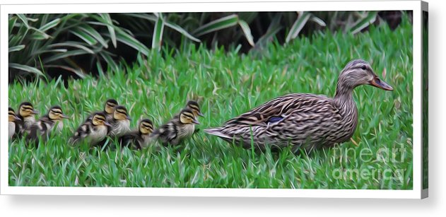 Make Way For The Ducklings Acrylic Print featuring the photograph Following Mommy by Lee Dos Santos