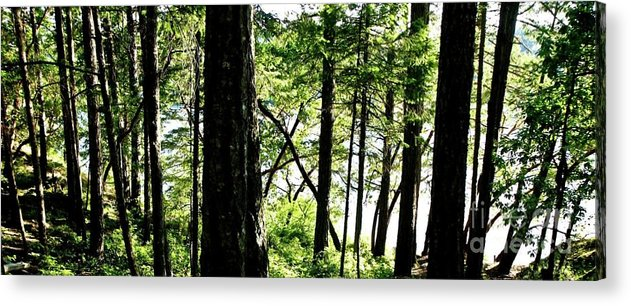 Trees Acrylic Print featuring the photograph Lost by Christine Redmond