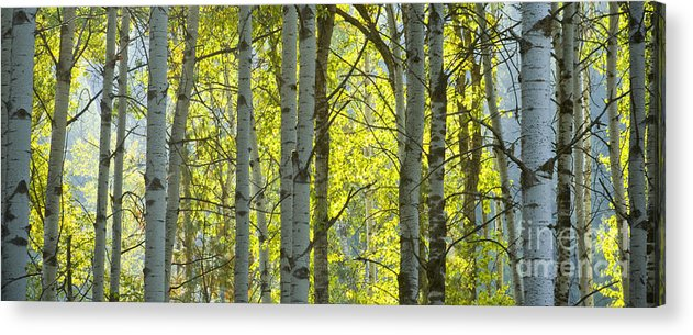 Trees Acrylic Print featuring the photograph Autumn Through The Trees by Idaho Scenic Images Linda Lantzy