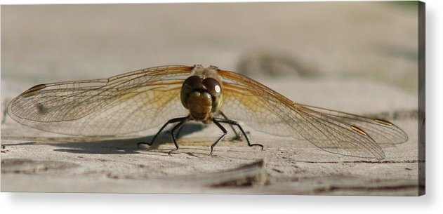 Dragonfly Acrylic Print featuring the photograph Dragonfly by Lori DeBruijn