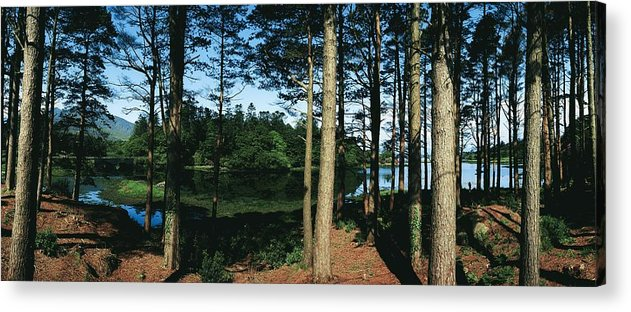Co Kerry Acrylic Print featuring the photograph Lauragh, Co Kerry, Ireland Trees In A by The Irish Image Collection