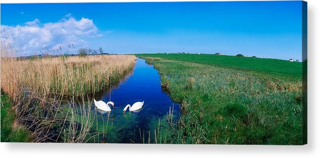 Birds Acrylic Print featuring the photograph Swans On Bog, Near Newcastle, Co by The Irish Image Collection