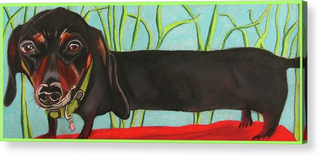 Dog Painting Acrylic Print featuring the pastel Dash Hound by Michelle Hayden-Marsan