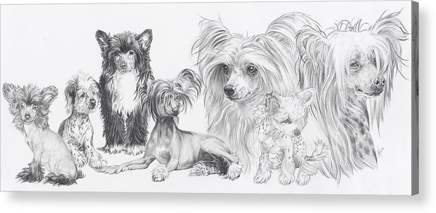 Toy Group Acrylic Print featuring the drawing Growing Up Chinese Crested And Powderpuff by Barbara Keith