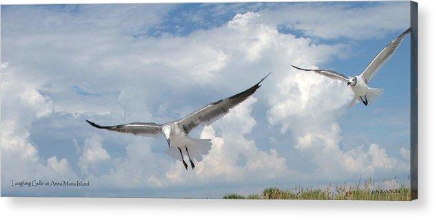 Gulls Acrylic Print featuring the photograph Gulls In Flight by Judy Waller