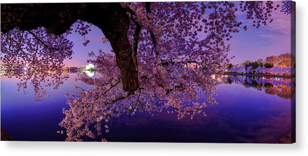 Dc Acrylic Print featuring the photograph Night Blossoms by Metro DC Photography