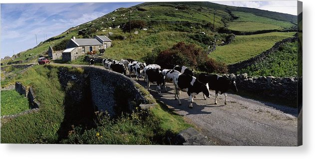 Architecture Acrylic Print featuring the photograph Slea Head, Dingle Peninsula, Co Kerry by The Irish Image Collection