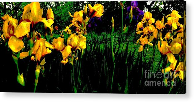 Photo Acrylic Print featuring the photograph Iris Field In Abstract by Marsha Heiken