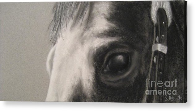 Horses Acrylic Print featuring the drawing Sunshine Queenie I by Sabina Haas