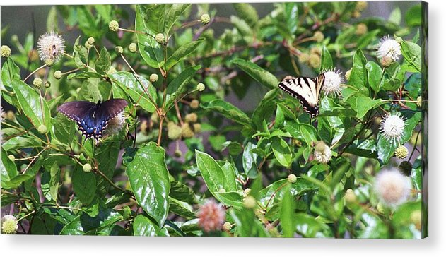 Butterfly Acrylic Print featuring the photograph 091707-1 Neighbors by Mike Davis