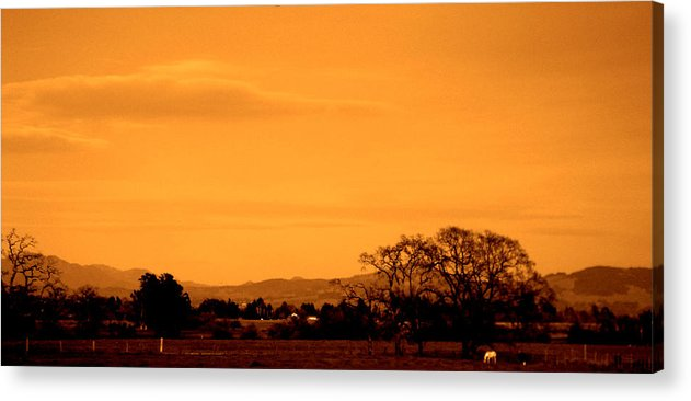 Landscapes Acrylic Print featuring the photograph Back Yard by Jeff DOttavio