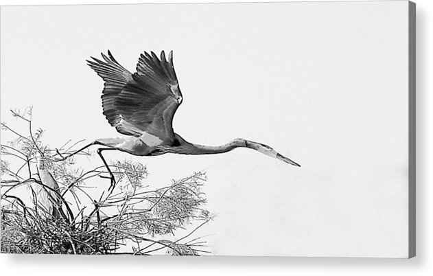 Acrylic Print featuring the photograph On The Wing by Joseph Reilly