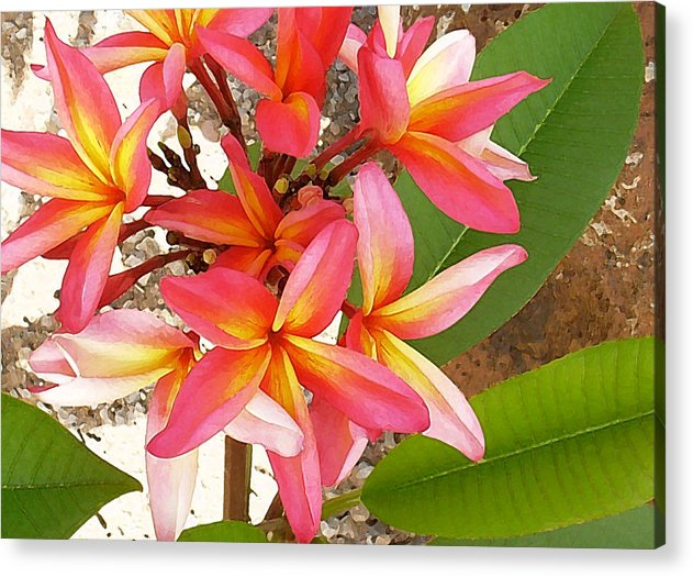 Hawaii Iphone Cases Acrylic Print featuring the photograph Plantation Plumeria by James Temple