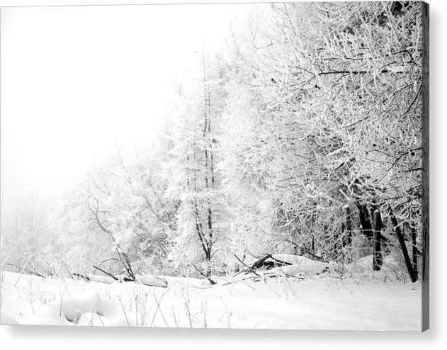 Frost Acrylic Print featuring the photograph Tree Line by Jessica Wakefield